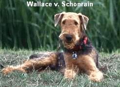 a_Wallace_Schoenrain1