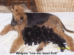 a_Welpen_Insel_Rott