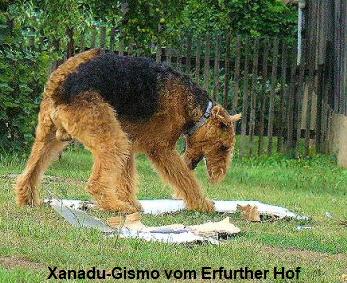 a_Xanadu_Gismo1