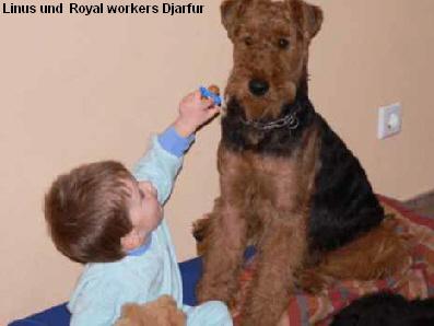 a_royal_workers_djarfur2