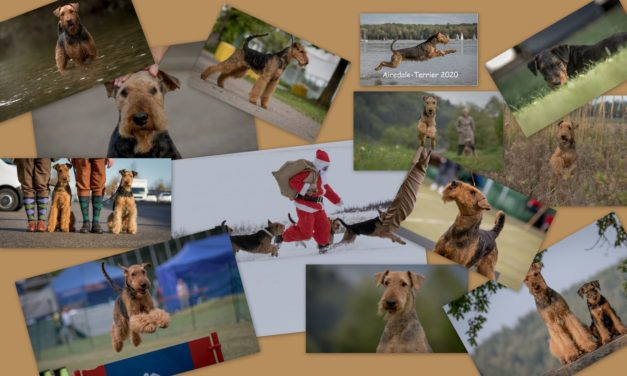 Airedale Kalender 2020